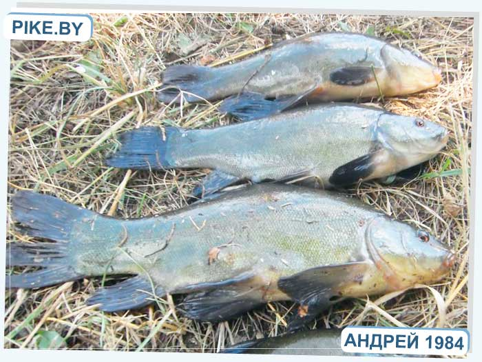 рыбалка на озере Струсто