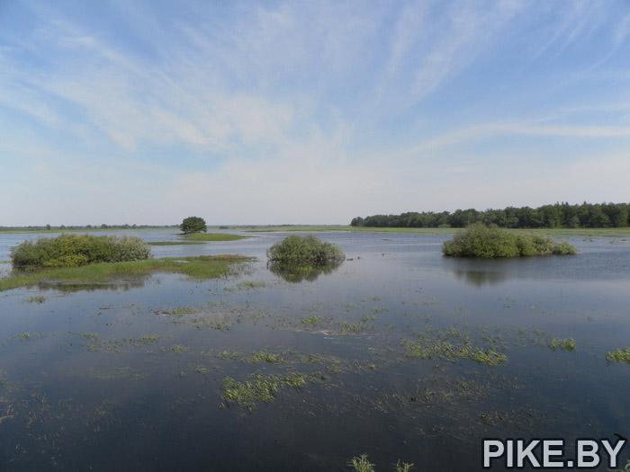 Быхов река Днепр