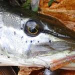Мелководье — пристанище хищника