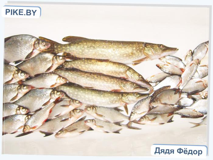 рыбалка на озере Отолово