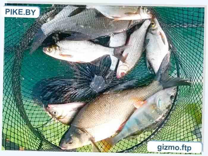 рыбалка на Усяжских