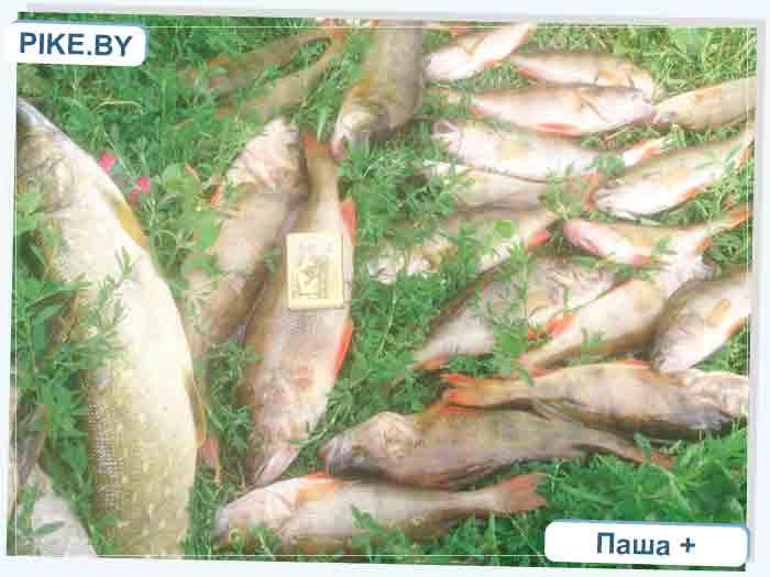 Усяжские разливы рыбалка
