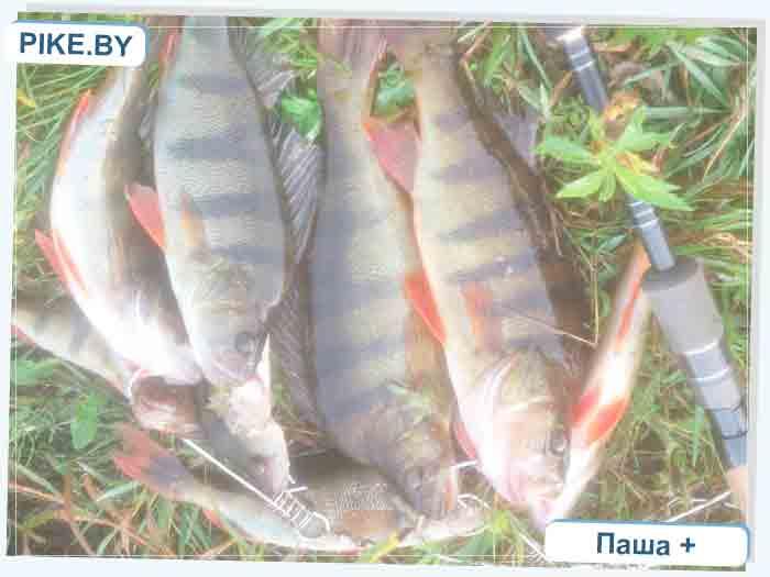 Усяжские торфяники рыбалка