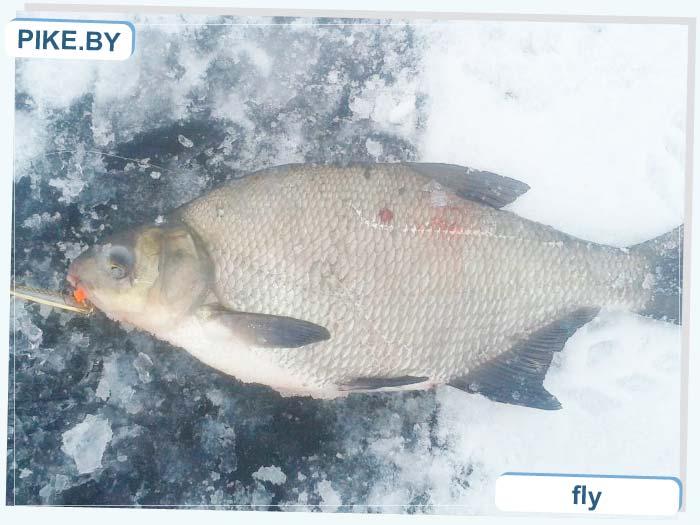 Селец рыбалка зимой