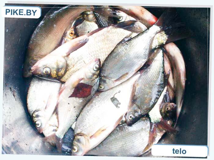 рыбалка на водохранилище Вяча