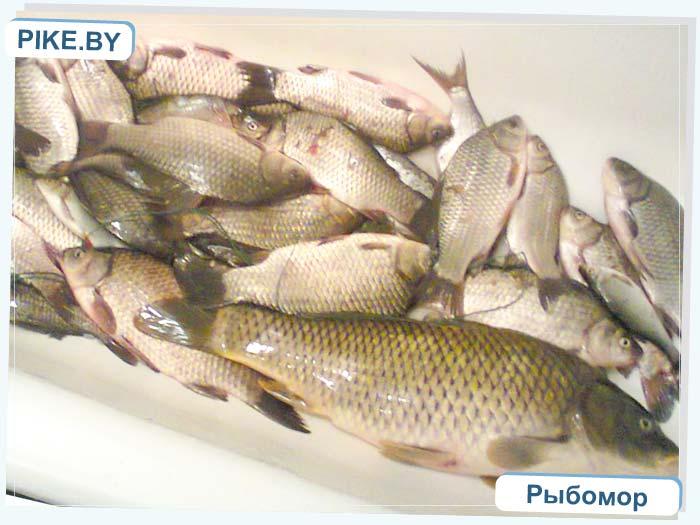 рыбалка на Днепро Брагинском