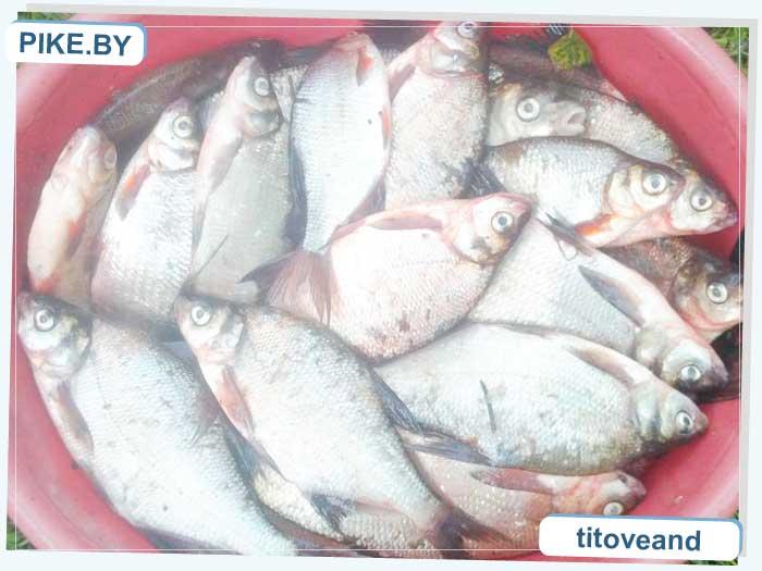 Осиповичское рыбалка