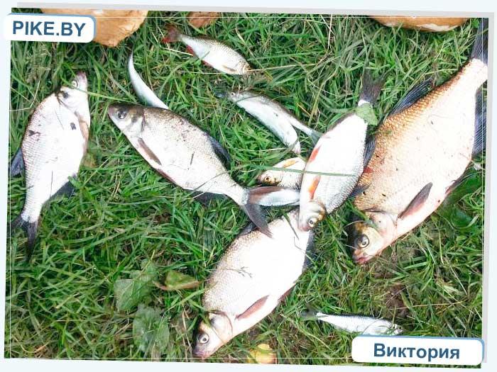 рыбалка на Осиповичском водохранилище