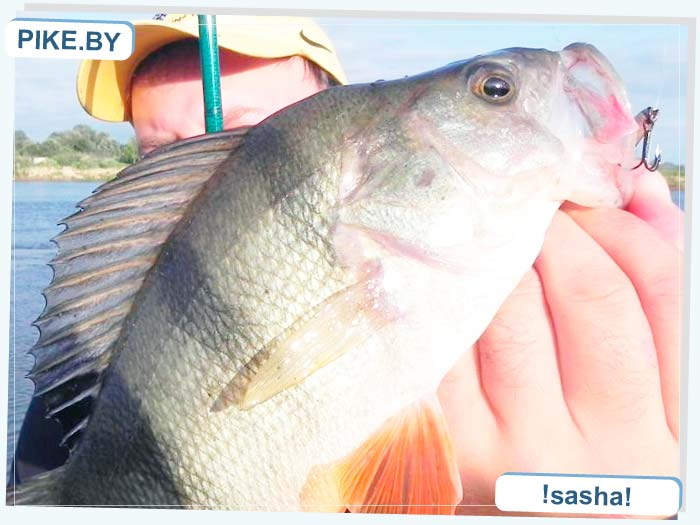 Днепр рыбалка
