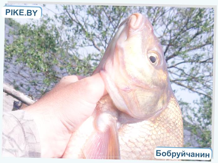 рыбалка на Чигиринском