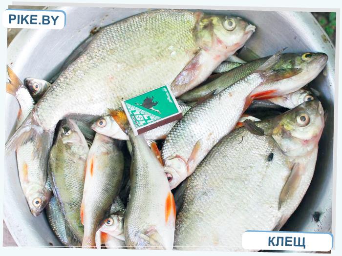 Чигиринское водохранилище рыбалка