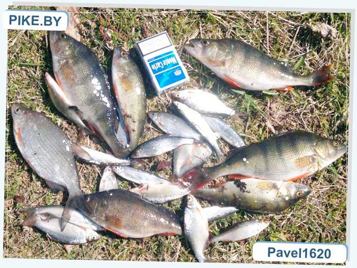 рыбалка на Лосвидо