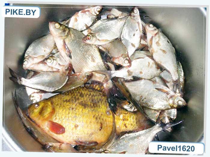 озеро Лосвидо рыбалка