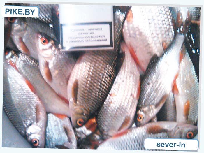 Рачунское рыбалка