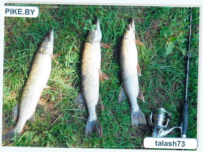 Снигнянское рыбалка