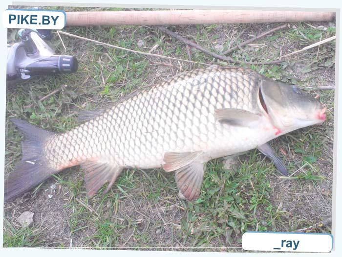 ТЭЦ 5 рыбалка