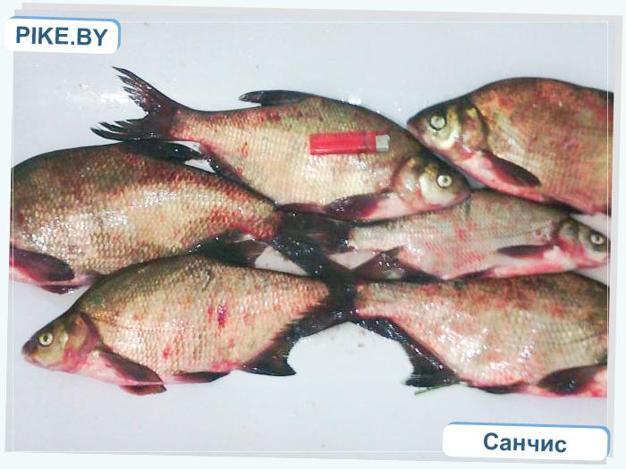 Заславское рыбалка