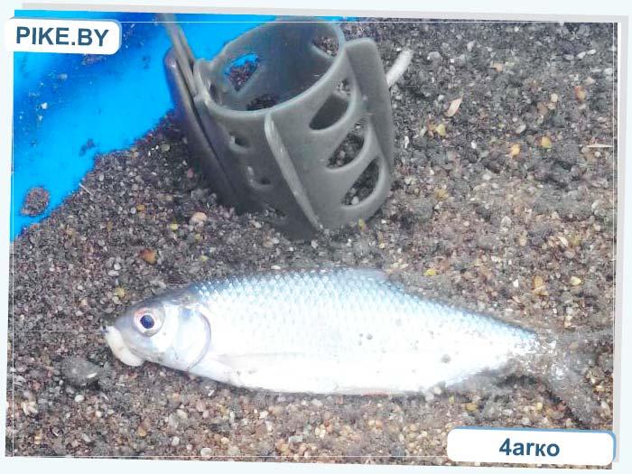 рыбалка на Зельвенском вдхр