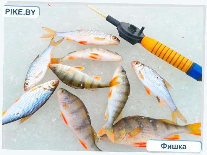 Зельвенское водохранилище рыбалка