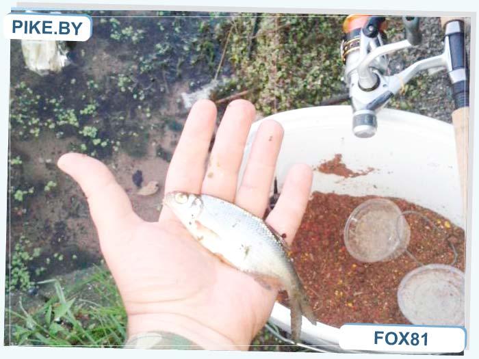 рыбалка в Барановичском районе