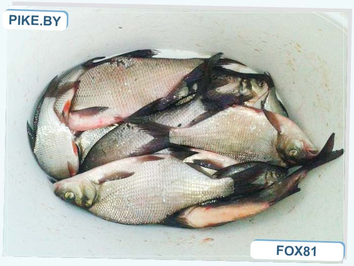 Барановичи рыбалка