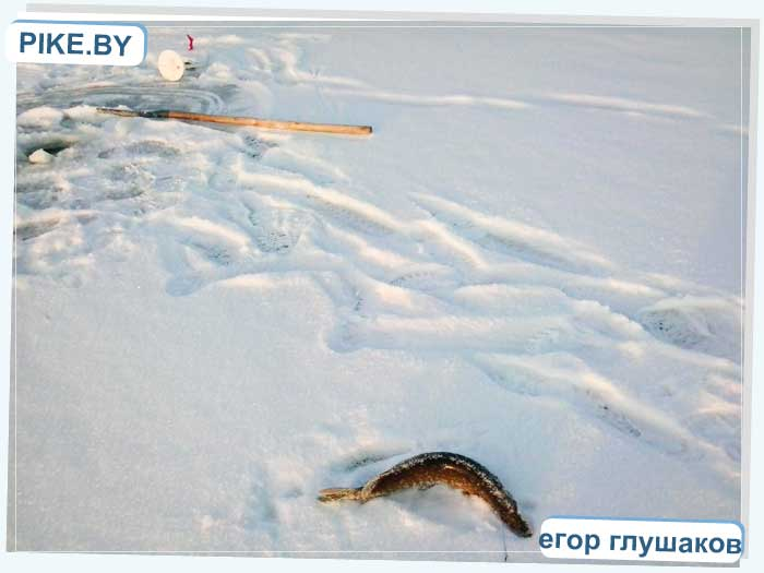 Кошо рыбалка зимой