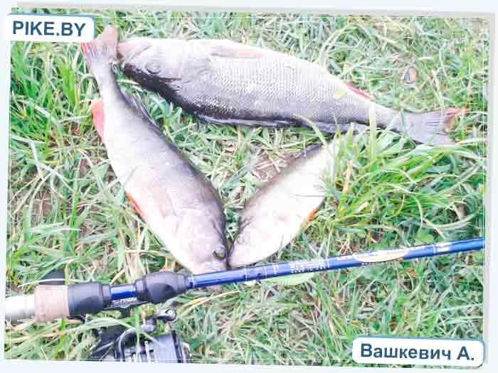рыбалка на Петровичском водохранилище