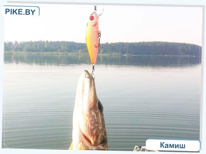 рыбалка на Петровичском