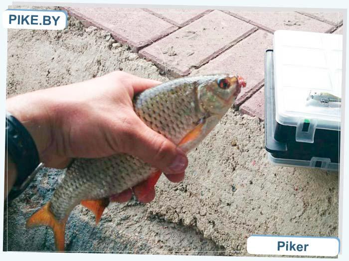 рыбалка на Свислочи