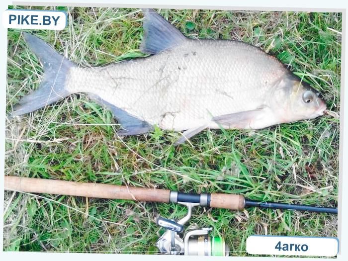 рыбалка в Волковыске