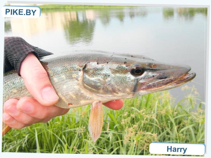 Волковыск рыбалка
