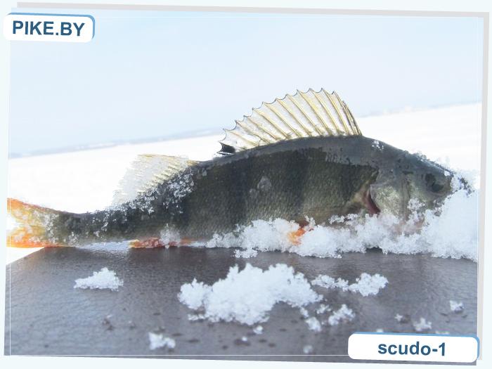 рыбалка на Мястро