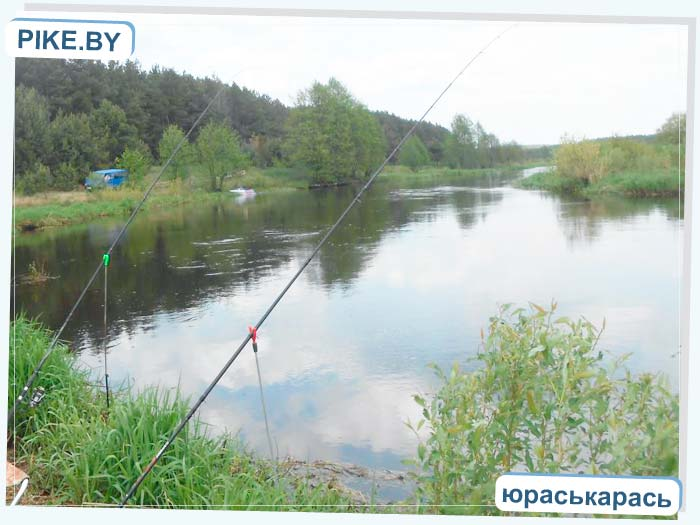 рыбалка на реке Щаре