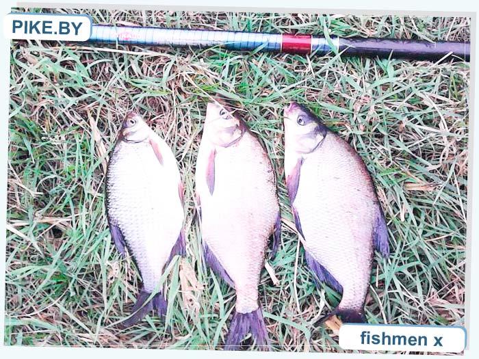 рыбалка на реке Ясельда