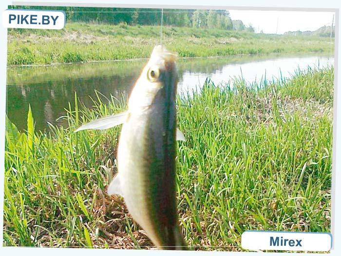 Ясельда рыбалка