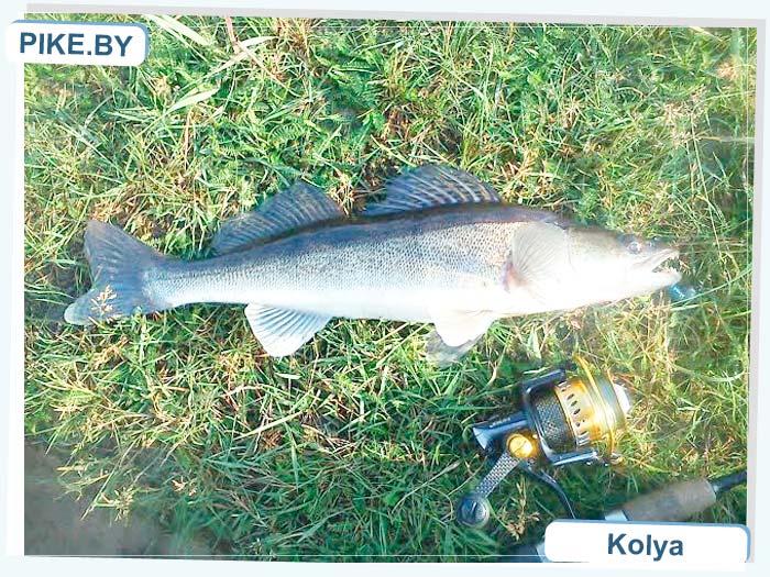 рыбалка на Мухавце