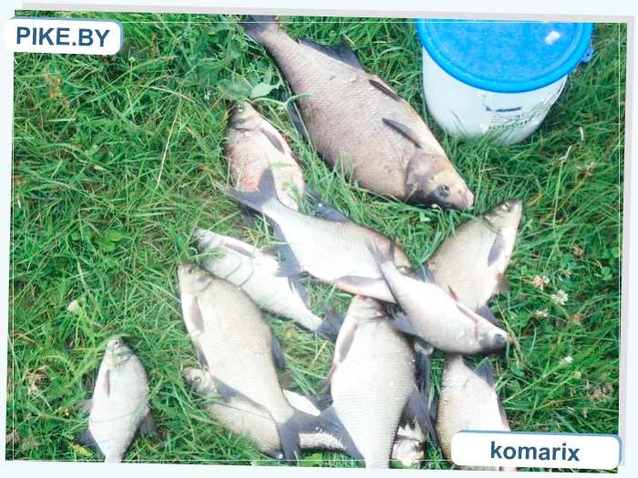 Вилия рыбалка