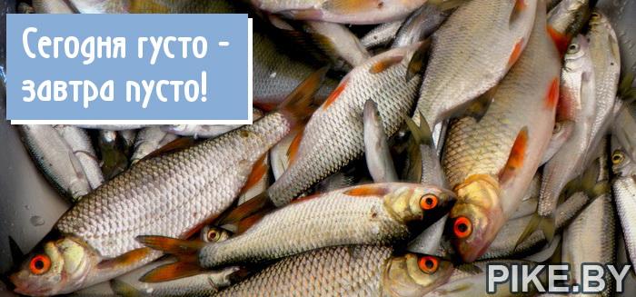 Норма вылова рыбы в Беларуси