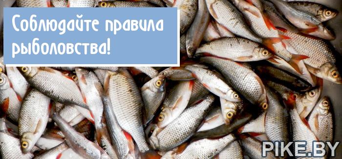 Норма вылова рыбы