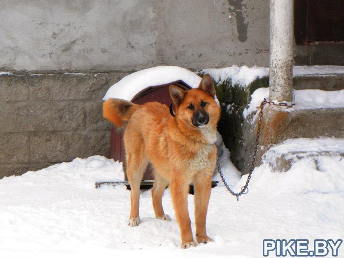 Новогрудский Пёсэ