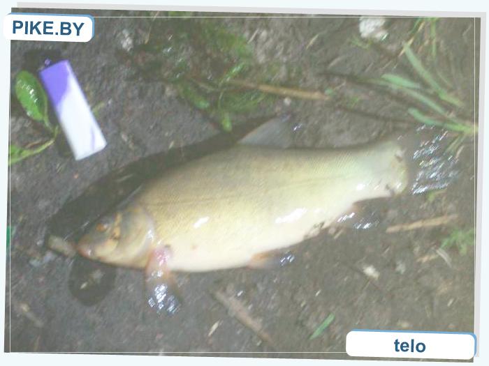 рыбалка на Чижовском