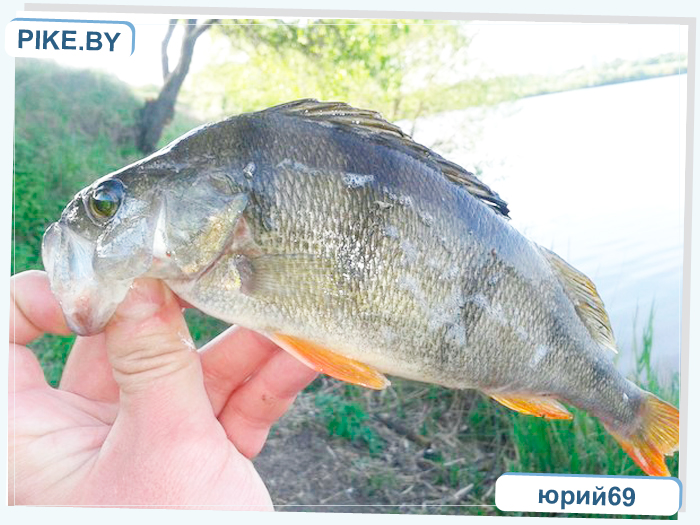 рыбалка на Чижовском водохранилище
