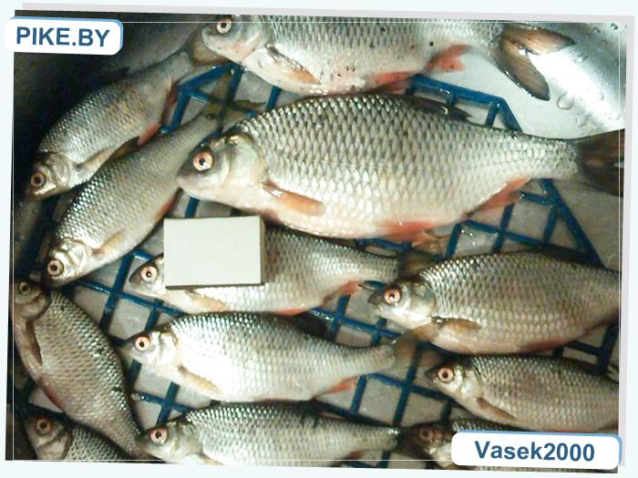 рыбалка на главном вилейском канале