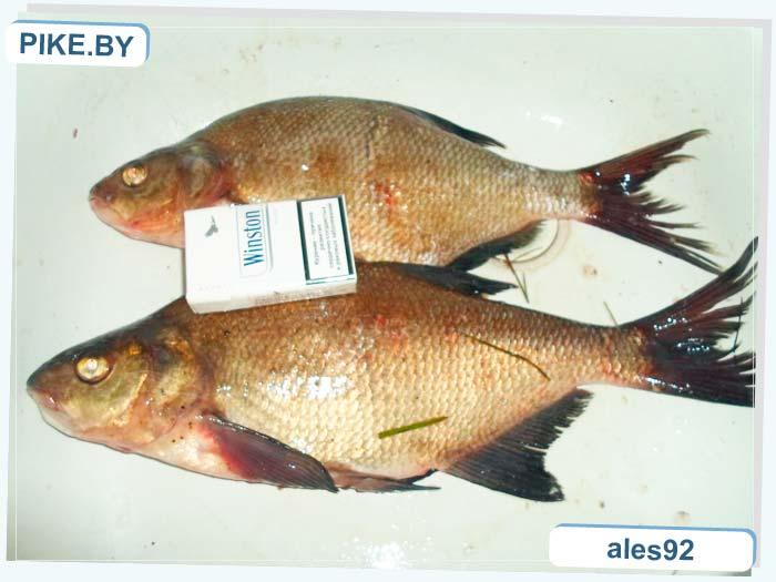 рыбалка на озере Бездонное