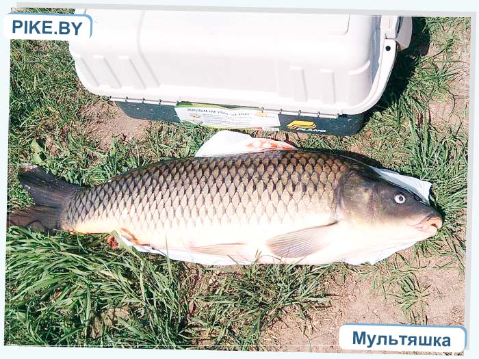 Лукомское озеро рыбалка