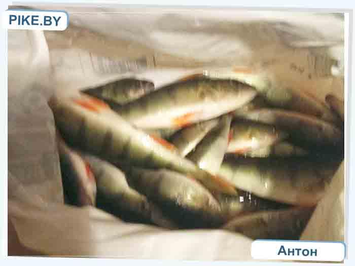 рыбалка на Нарочи