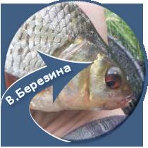 рыбалка на реке Восточная Березина