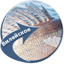 рыбалка на Вилейском водохранилище