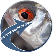рыбалка на Волчковичском водохранилище