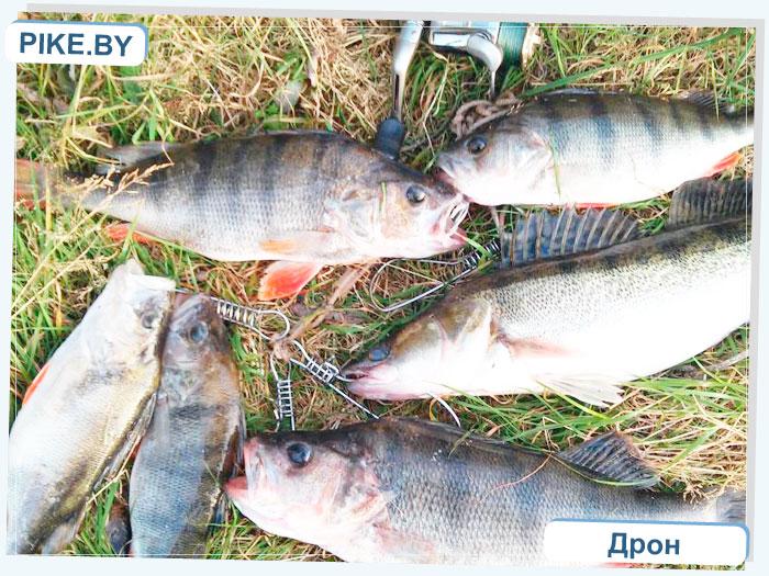 окунь рыбалка на вилейском летом